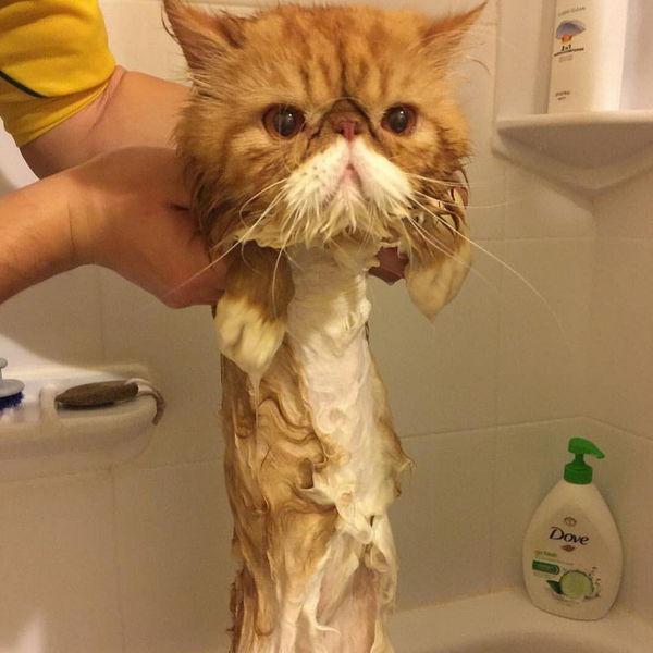 Кошки смешные картинки до слез